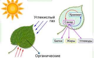 Использование энергии солнечного света в современном мире
